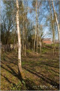 04112016_Ancien-cimetière-de-Calonne_029